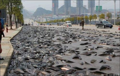 事故で魚がいっぱい落ちたの画像6