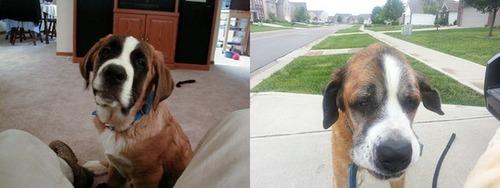 犬や猫の最初に撮った写真と最後に撮った写真の数々の画像(24枚目)