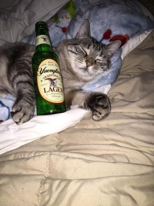 お酒大好き?お酒が好きそうな動物の画像の数々!!の画像(31枚目)