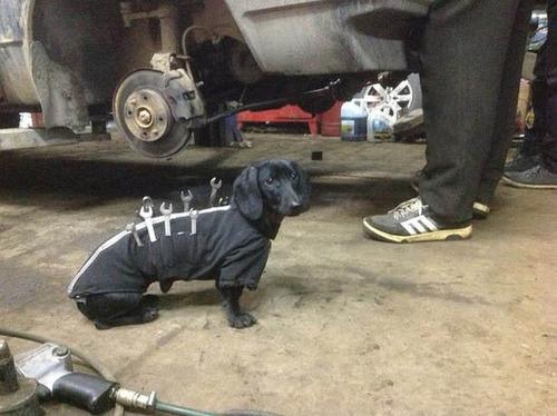 自動車整備を助けるワンコがとても助かる!!の画像(5枚目)