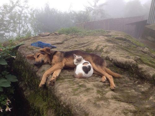 ほのぼのする!仲の良い犬と猫の画像の数々!!の画像(16枚目)
