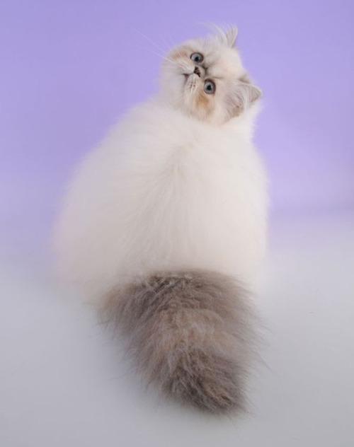 かわい過ぎる猫ちゃんの画像(18枚目)