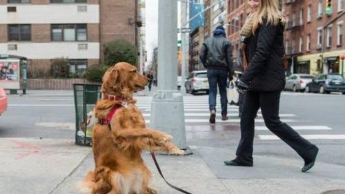 二足歩行しているかわいい動物の画像(8枚目)