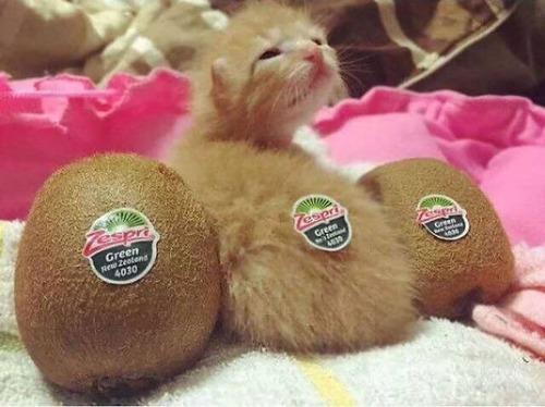 kittens_19