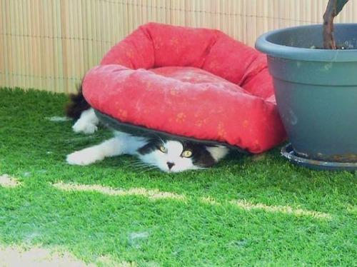 にゃんとも言えない、ちょっと困った猫の画像の数々!!の画像(8枚目)