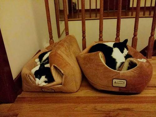 にゃんとも言えない、ちょっと困った猫の画像の数々!!の画像(14枚目)