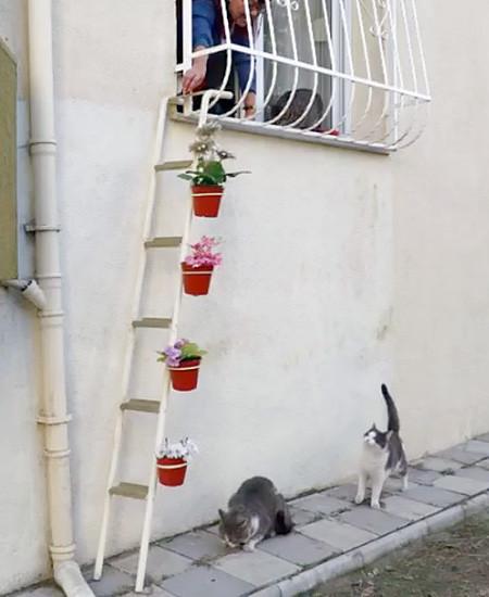 猫ちゃん用の階段の画像(6枚目)