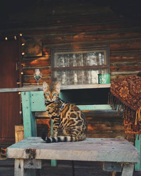 美しい風景と猫の画像(28枚目)
