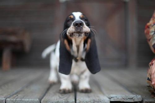 かわい過ぎる子犬の画像の数々!の画像(72枚目)
