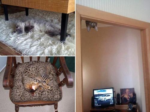隠れているつもりの猫の画像(12枚目)
