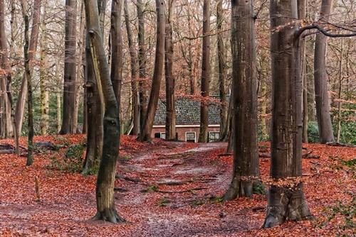 森の中の隠れ家の画像(46枚目)