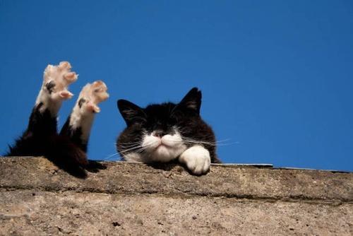 神々しい猫の画像(14枚目)