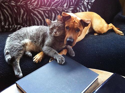 ほのぼのする!仲の良い犬と猫の画像の数々!!の画像(8枚目)