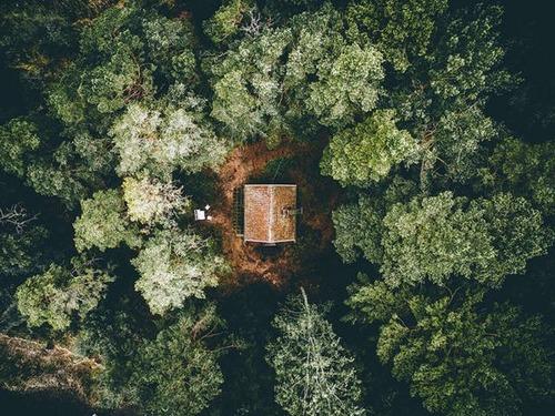 森の中の隠れ家の画像(25枚目)