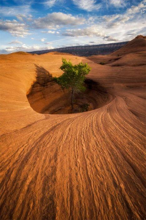 生えている樹木の画像(22枚目)