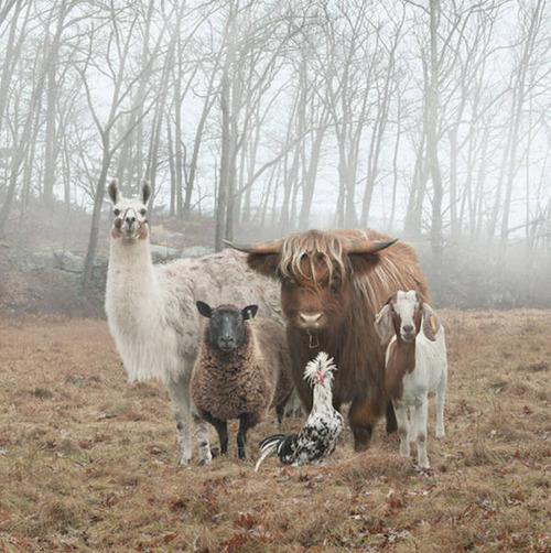 動物達の集合写真の画像(1枚目)