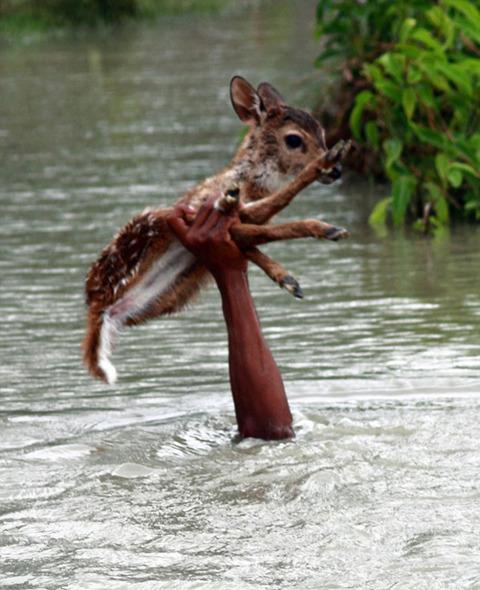 濁流に捲込まれた子鹿の助け方がワイルドすぎる少年!の画像(2枚目)