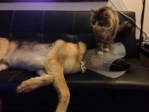 猫と犬の力関係の画像(7枚目)