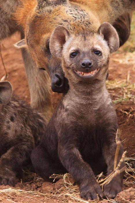 幸せそうな表情の動物達の画像(16枚目)