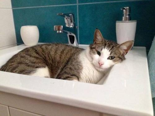 にゃんとも言えない、ちょっと困った猫の画像の数々!!の画像(33枚目)
