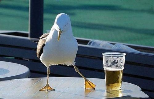 世界各国のビールとの付合い方の画像(12枚目)