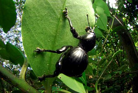 進化の過程が謎の生物…昆虫 : ガリレオブログ-FX&ゲーム-
