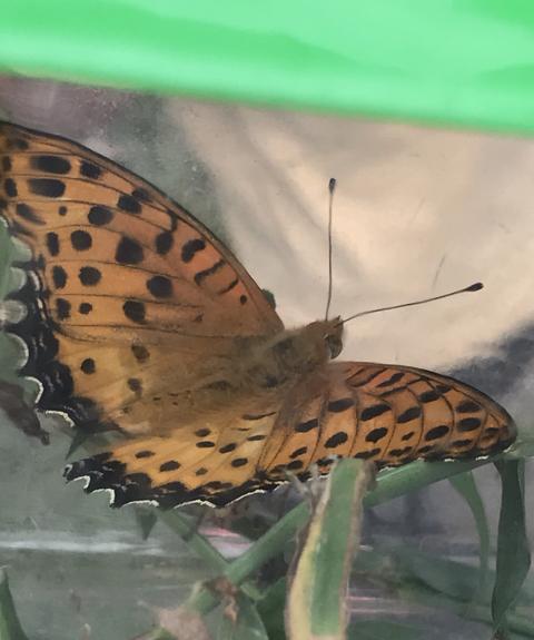 わからん蝶