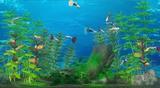 アクアリビング テレビでながめる魚たち Wii