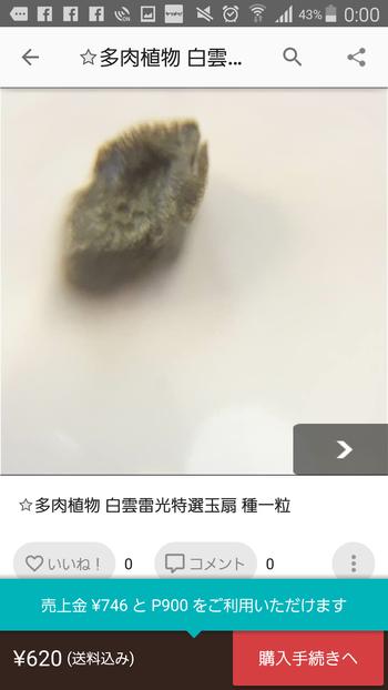 【メルカリウォッチ】多肉植物 白雲雷光特選玉扇 種一粒(620円)
