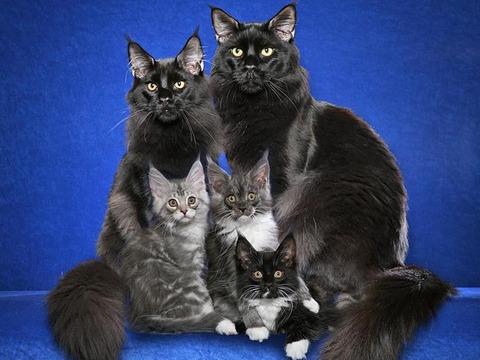 cat_family