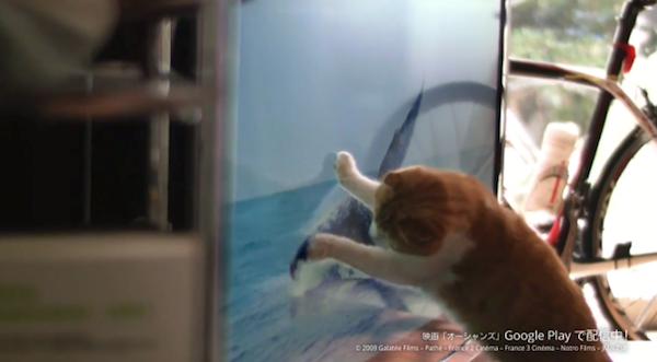 Chromecast猫