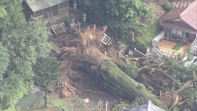 樹齢1200年倒れる 豪雨影響か、40mのご神木 …電柱なぎ倒し民家損壊