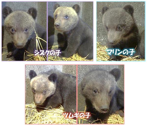 脅迫!「市役所にツキノワグマ5頭を放す」福島県の南相馬市役所に予告メール ・・・クマ5頭どこから調達すんの?
