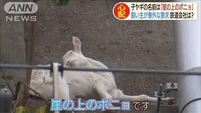 """千葉で脱走の子ヤギ、""""崖の上""""に住み着き「ポニョ」と命名 飼い主「ヤギはここにいるのが一番幸せ」ってw"""