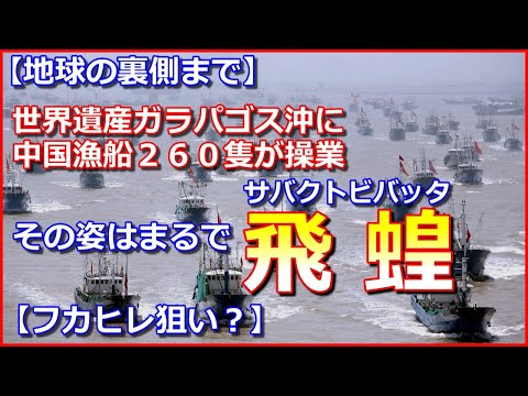 ガラパゴス諸島周辺に中国漁船260隻違法操業 エクアドルと南米各国キレる ・・・海を渡るバッタの大群だな!