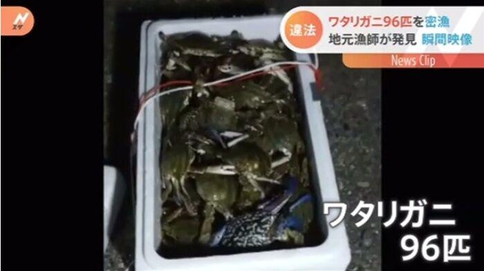 愛知県ではカニ96匹を密漁、フィリピン人の男2人を書類送検 地元漁師が発見