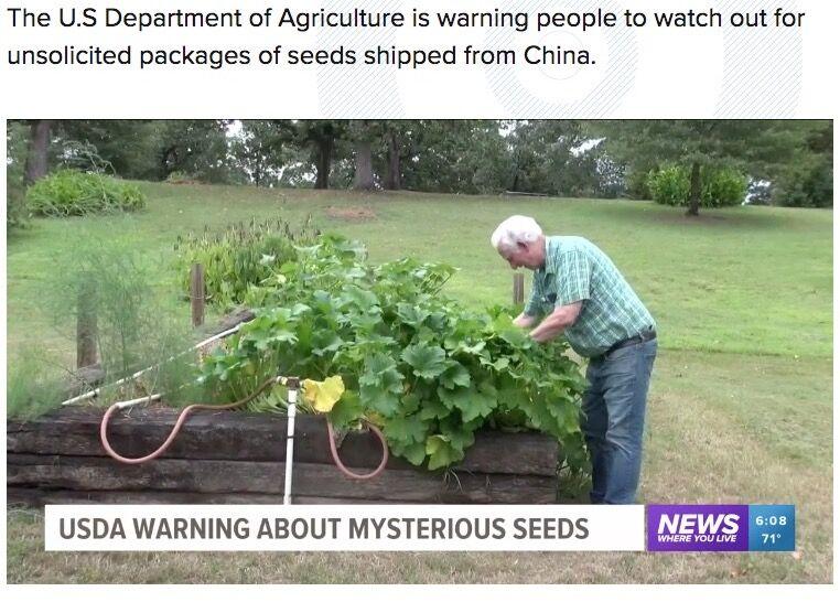 中国から届いた種、植えてみたら謎の植物が物凄い勢いで成長し出した件 ・・・頭お花畑な市民が草を成長させてwww