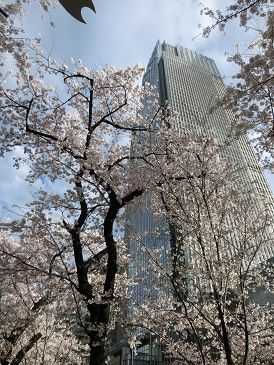 東京さくら