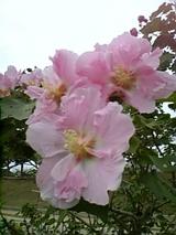 運動公園に咲いていたやさしい花