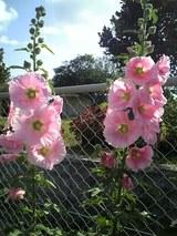 運動公園脇の花