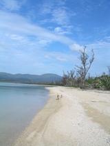石垣島の海岸を走るわんこたち