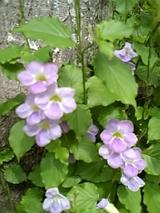 アップル公園手前に咲くかわいい花
