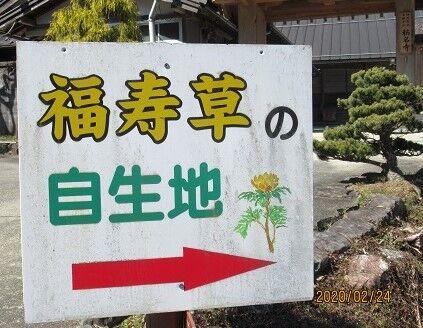 福寿草看板