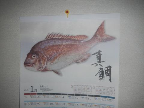 DSCN5338