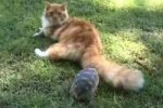 ネコを自分の縄張りから追い出そうとするカメ