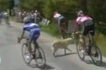 自転車レースにて犬と衝突するハプニング映像
