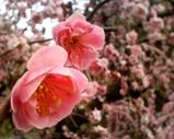 Blog_080323_桃2.JPG
