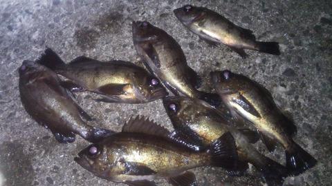 14根魚遊戯 5