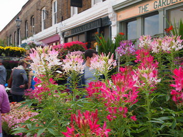 イギリス編⑤  Columbia road Flower Market