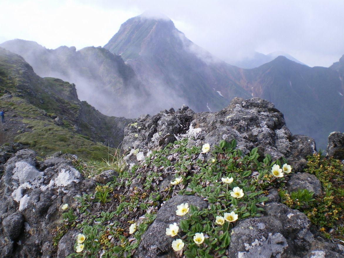 八ヶ岳の高山植物 ~硫黄岳から横岳のお花畑~